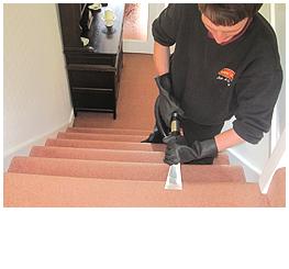 carpet repairs torquay